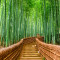 Kyoto, Japan at the Bamboo Forest.
